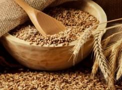 Тендер на поставку 50 000 тонн пшеницы от 5 октября 2017